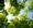 44 arbres replantés par Résonance : une action en faveur de la protection de l'environnement